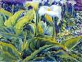 130 - Cala Lilies