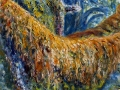 1304 - Canyon Live Oak