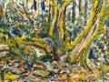 1403 - Trees, Bolinas Ridge
