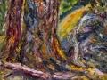 1404 - Douglas Firs and Rocks on Bolinas Ridge